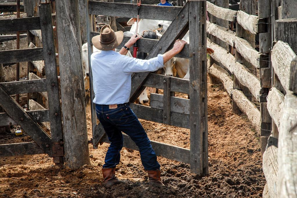 Haulmark cattle trailer: Review - www trucksales com au